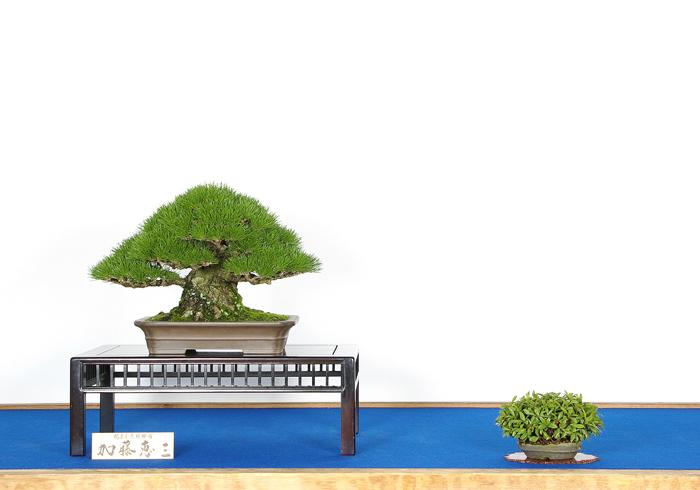 加藤 恵三