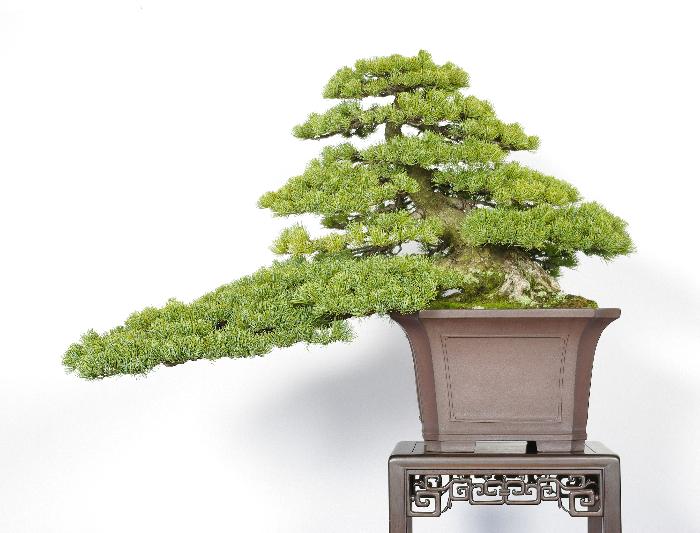 北川 清春