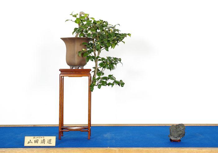 山田 清道